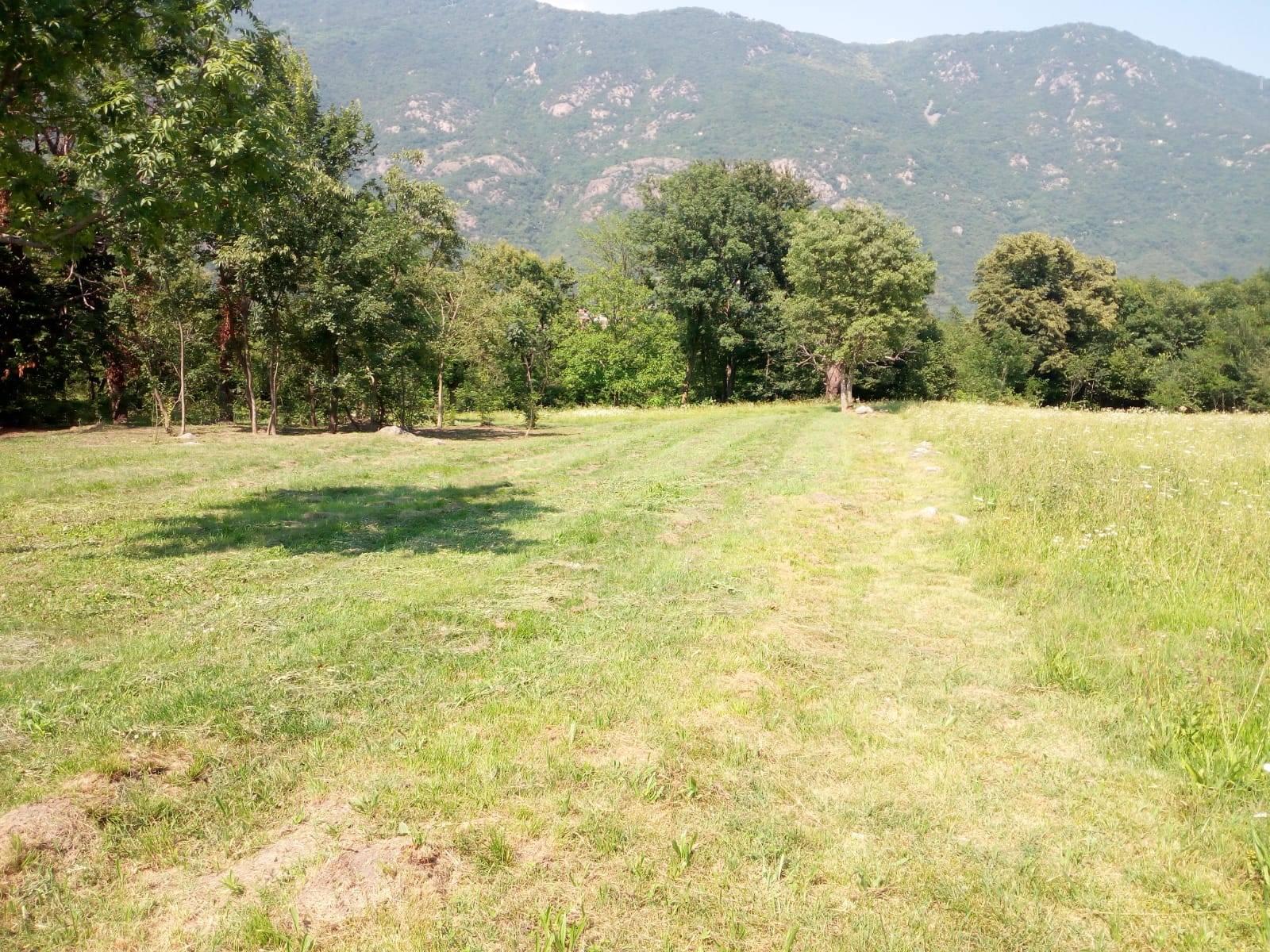 Villar Focchiardo (TO): terreno agricolo zona soleggiata